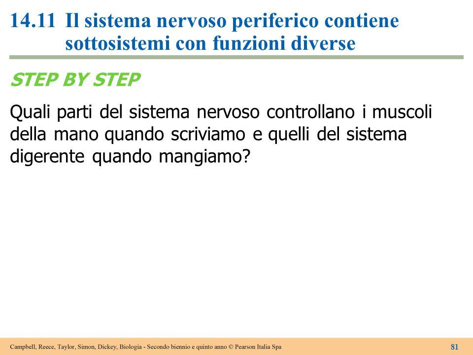 STEP BY STEP Quali parti del sistema nervoso controllano i muscoli della mano quando scriviamo e quelli del sistema digerente quando mangiamo? 81 14.1