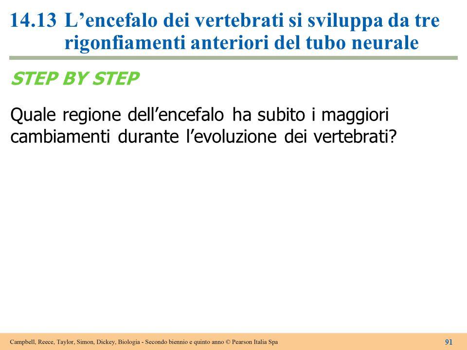 14.13L'encefalo dei vertebrati si sviluppa da tre rigonfiamenti anteriori del tubo neurale STEP BY STEP Quale regione dell'encefalo ha subito i maggio