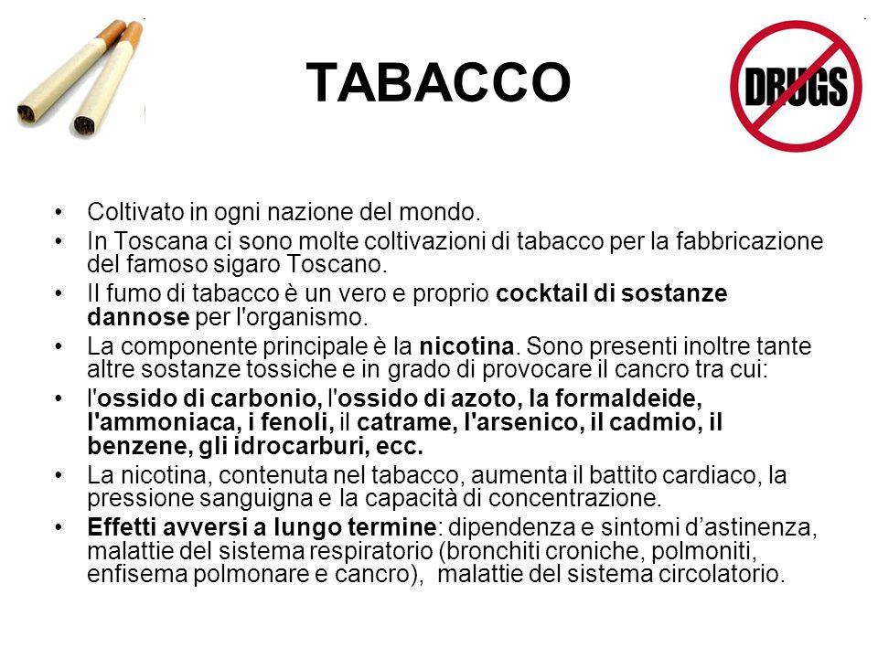 TABACCO Coltivato in ogni nazione del mondo. In Toscana ci sono molte coltivazioni di tabacco per la fabbricazione del famoso sigaro Toscano. Il fumo