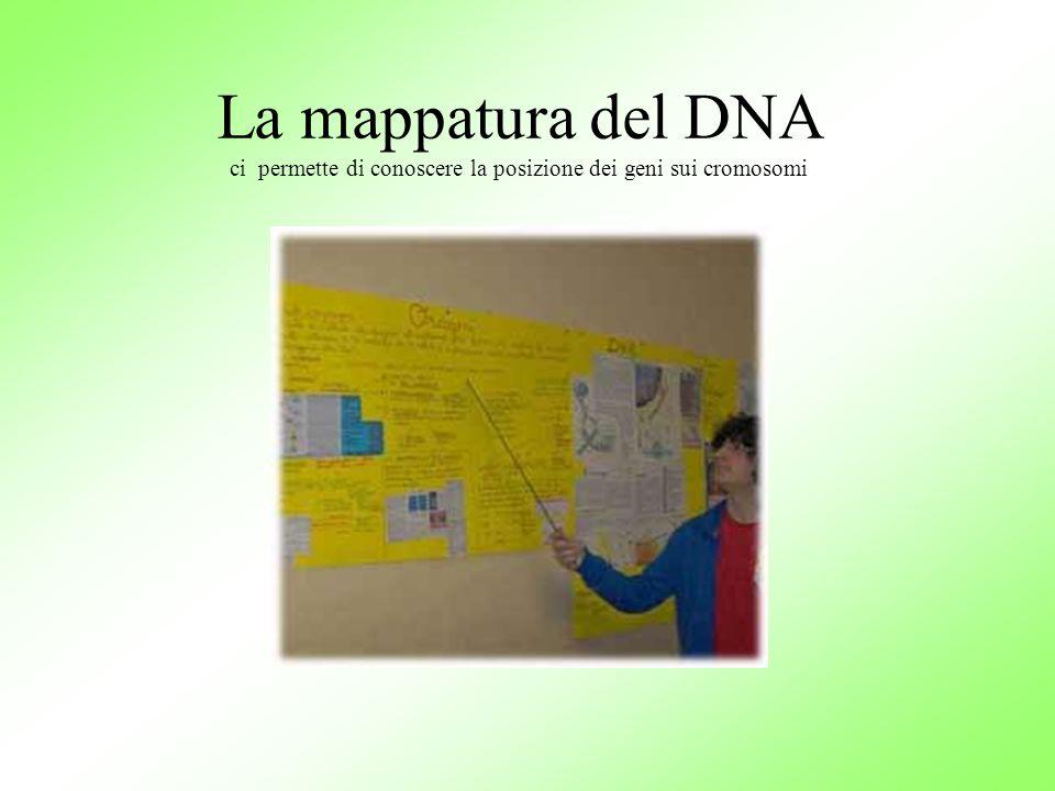 La mappatura del DNA ci permette di conoscere la posizione dei geni sui cromosomi