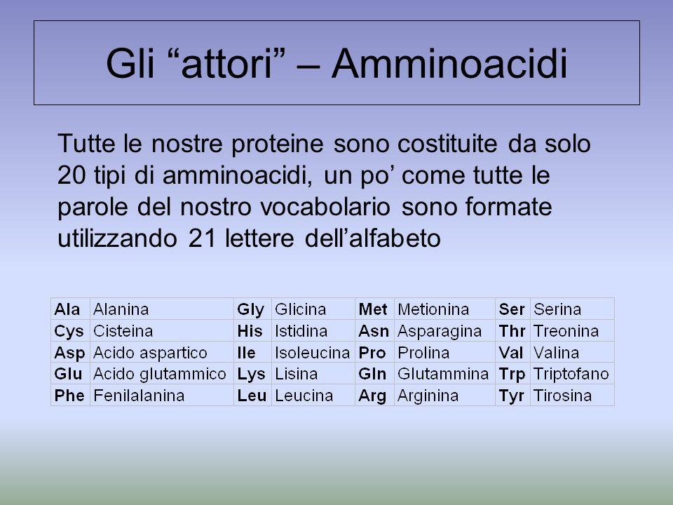 Gli attori – Amminoacidi Tutte le nostre proteine sono costituite da solo 20 tipi di amminoacidi, un po' come tutte le parole del nostro vocabolario sono formate utilizzando 21 lettere dell'alfabeto