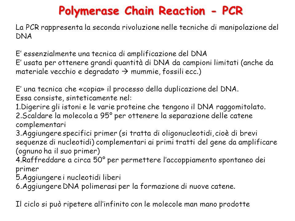 La PCR rappresenta la seconda rivoluzione nelle tecniche di manipolazione del DNA E' essenzialmente una tecnica di amplificazione del DNA E' usata per