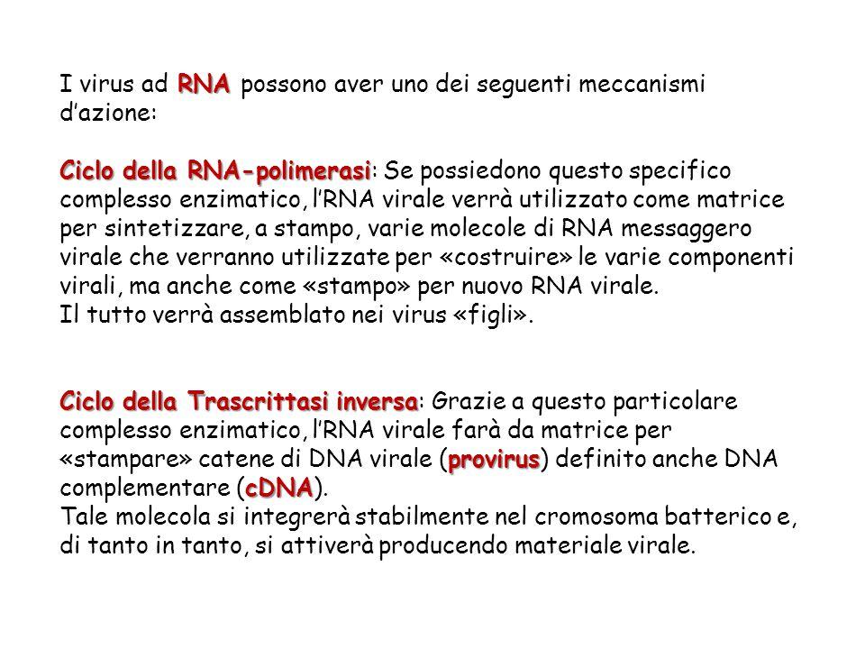 RNA I virus ad RNA possono aver uno dei seguenti meccanismi d'azione: Ciclo della RNA-polimerasi Ciclo della RNA-polimerasi: Se possiedono questo spec