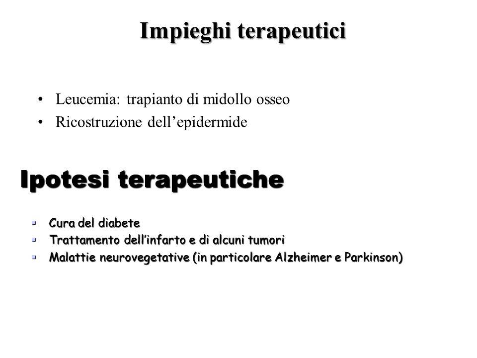 Impieghi terapeutici Leucemia: trapianto di midollo osseo Ricostruzione dell'epidermide Ipotesi terapeutiche  Cura del diabete  Trattamento dell'inf