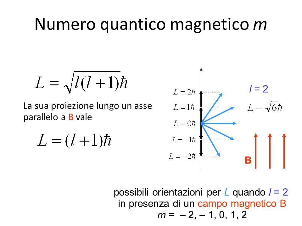 B possibili orientazioni per L quando l = 2 in presenza di un campo magnetico B m = – 2, – 1, 0, 1, 2 La sua proiezione lungo un asse parallelo a B va