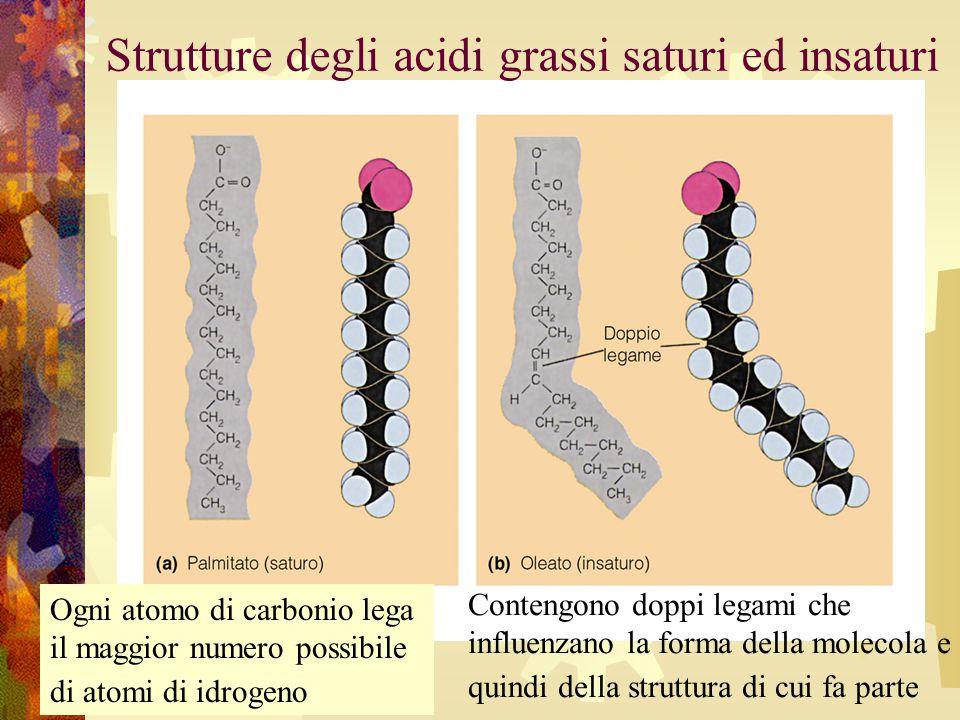 Strutture degli acidi grassi saturi ed insaturi Ogni atomo di carbonio lega il maggior numero possibile di atomi di idrogeno Contengono doppi legami c