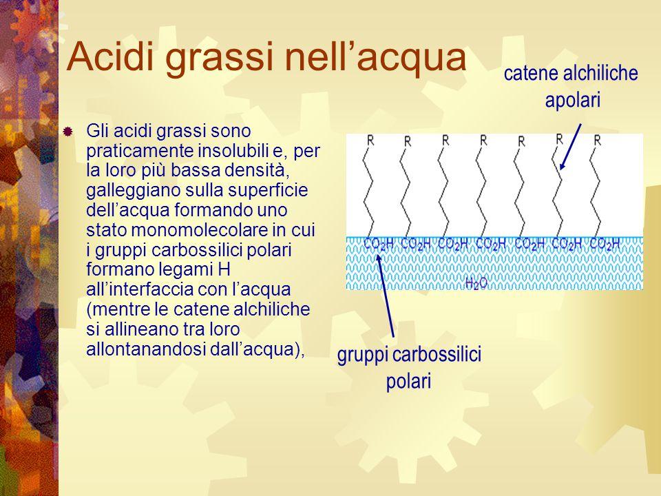 Acidi grassi nell'acqua  Gli acidi grassi sono praticamente insolubili e, per la loro più bassa densità, galleggiano sulla superficie dell'acqua form