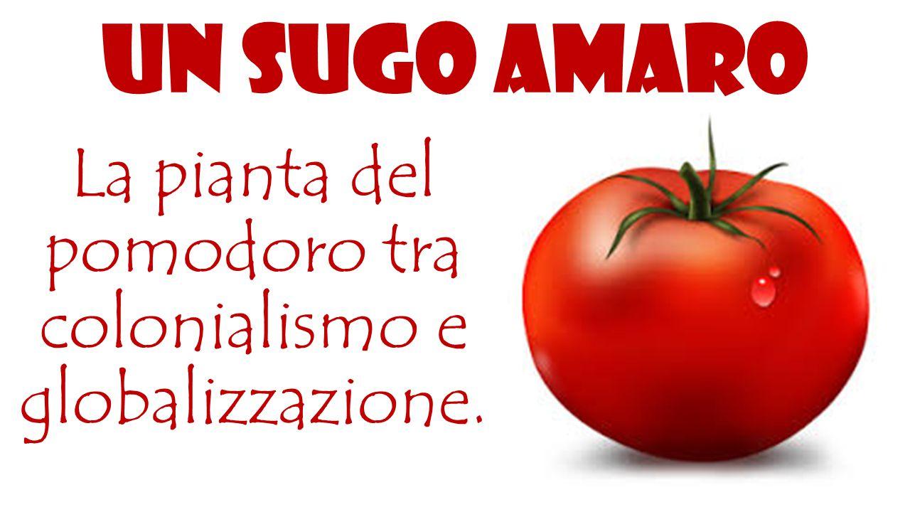 Il pomodoro è originario della zona compresa oggi tra il Messico e il Perù.