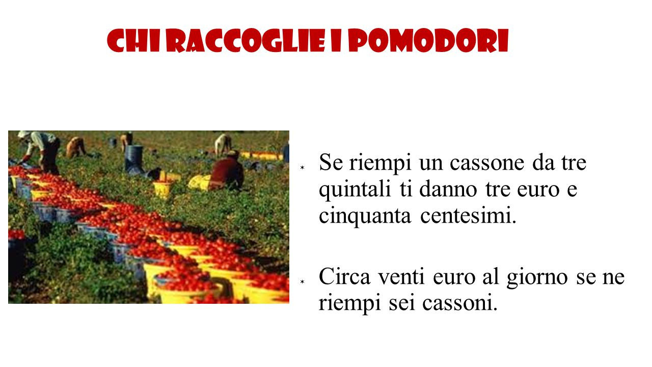 Chi raccoglie i pomodori  Se riempi un cassone da tre quintali ti danno tre euro e cinquanta centesimi.  Circa venti euro al giorno se ne riempi sei