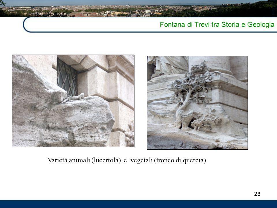 28 Fontana di Trevi tra Storia e Geologia Varietà animali (lucertola) e vegetali (tronco di quercia)