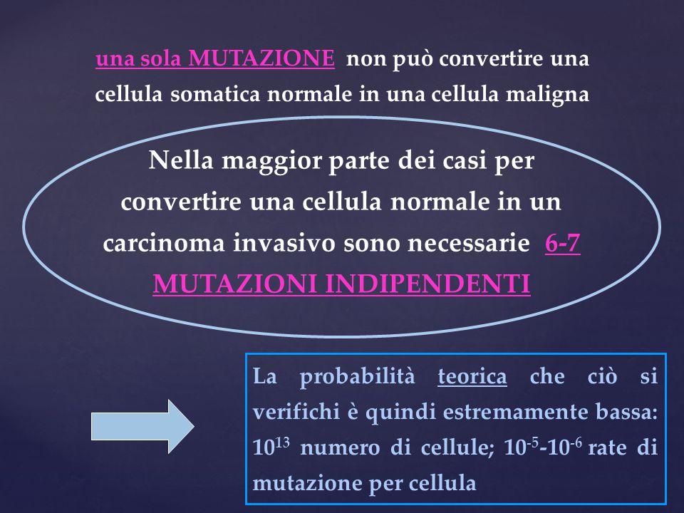 una sola MUTAZIONE non può convertire una cellula somatica normale in una cellula maligna Nella maggior parte dei casi per convertire una cellula norm