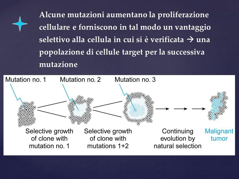 Alcune mutazioni aumentano la proliferazione cellulare e forniscono in tal modo un vantaggio selettivo alla cellula in cui si è verificata  una popol