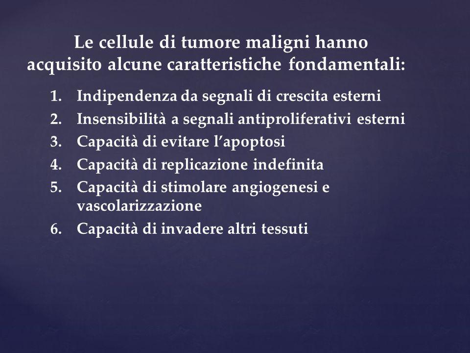 Le cellule di tumore maligni hanno acquisito alcune caratteristiche fondamentali: 1.Indipendenza da segnali di crescita esterni 2.Insensibilità a segn