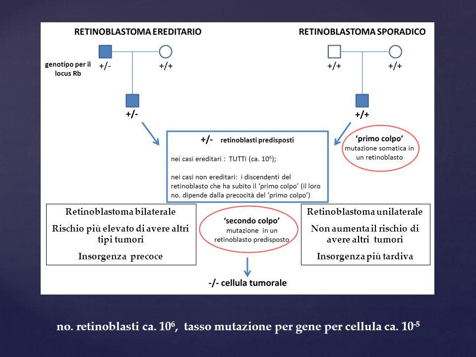 no. retinoblasti ca. 10 6, tasso mutazione per gene per cellula ca. 10 -5 Retinoblastoma bilaterale Rischio più elevato di avere altri tipi tumori Ins