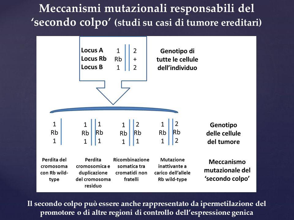 Meccanismi mutazionali responsabili del 'secondo colpo' (studi su casi di tumore ereditari) Il secondo colpo può essere anche rappresentato da ipermet