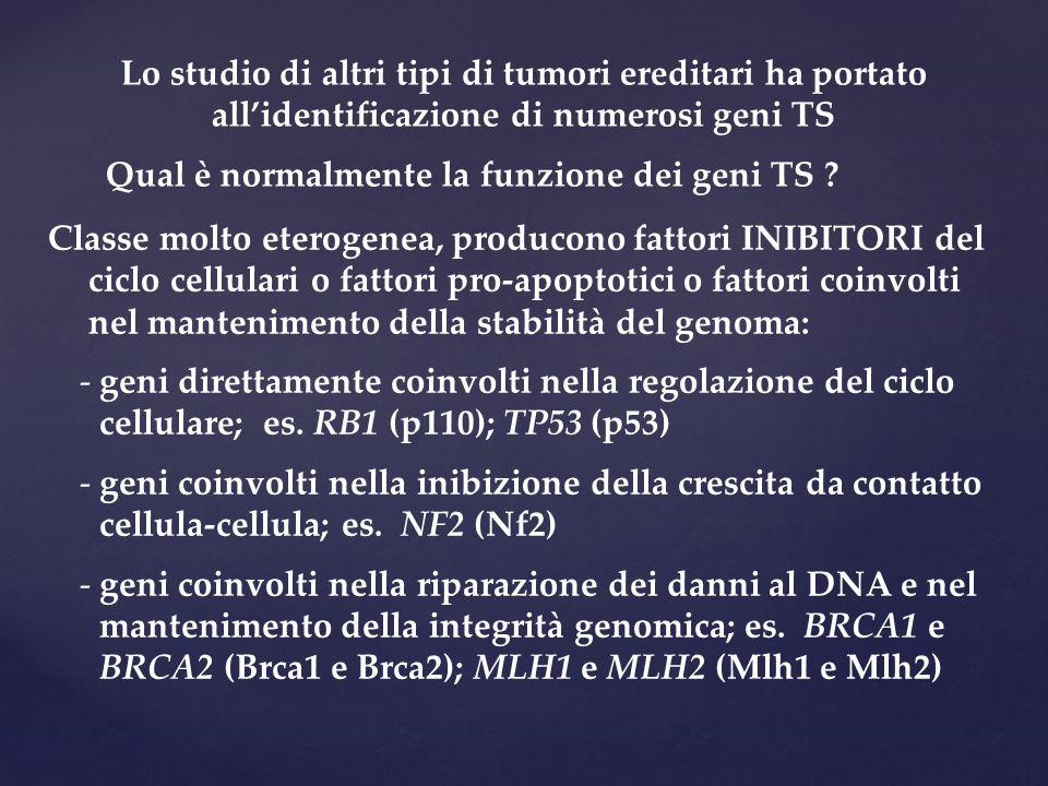 Lo studio di altri tipi di tumori ereditari ha portato all'identificazione di numerosi geni TS Qual è normalmente la funzione dei geni TS ? Classe mol