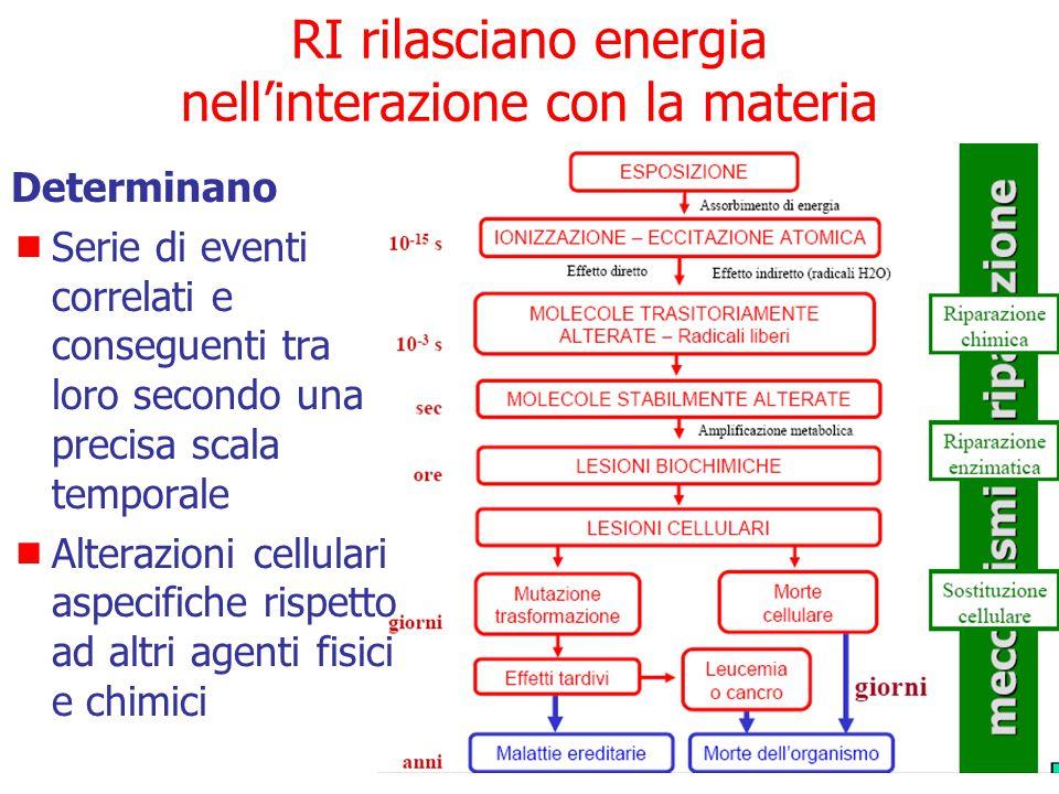 Effetti delle radiazioni ionizzanti Gli effetti delle RI si manifestano solo se si verifica una cessione di energia al mezzo attraversato. In particol