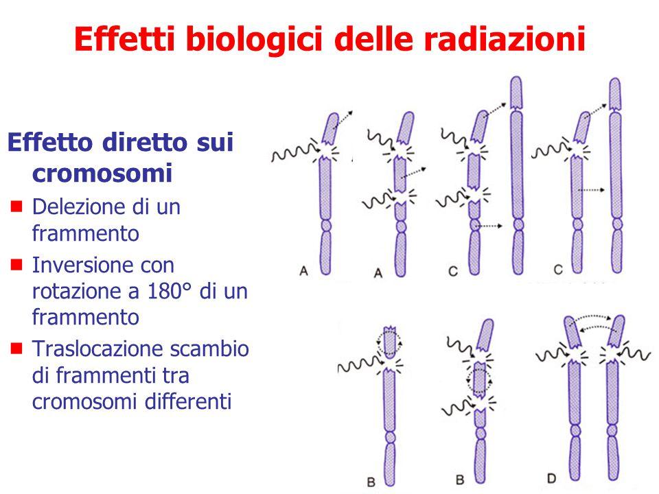 Danni irreversibili (non riparabili)  Rottura della catena  Rottura del doppio filamento  Rottura cromosomica (RI ad alto LET) Cross-linking Mutazi