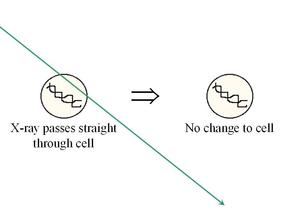 Effetto diretto sui cromosomi  Aberrazione (es. aberrazione anulare)  Cromosoma dicentrico Effetti biologici delle radiazioni