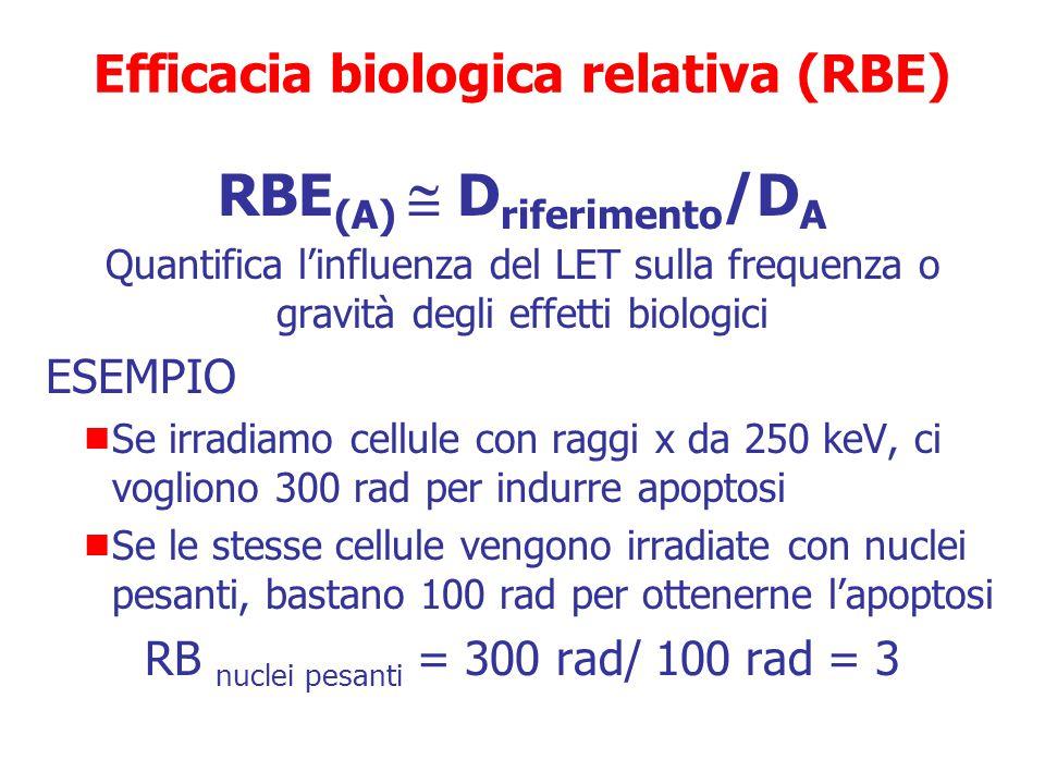 RBE (A)  D riferimento /D A Quantifica l'influenza del LET sulla frequenza o gravità degli effetti biologici  D riferimento = dose assorbita della R
