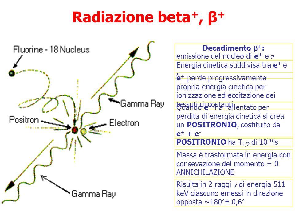 Decadimento  + : emissione dal nucleo di e + e Energia cinetica suddivisa tra e + e e + perde progressivamente propria energia cinetica per ionizzazione ed eccitazione dei tessuti circostanti Quando e + ha rallentato per perdita di energia cinetica si crea un POSITRONIO, costituito da e + + e - POSITRONIO ha T 1/2 di 10 -10 s Massa è trasformata in energia con consevazione del momento = 0 ANNICHILAZIONE Risulta in 2 raggi  di energia 511 keV ciascuno emessi in direzione opposta ~180°± 0,6° Radiazione beta +, β +