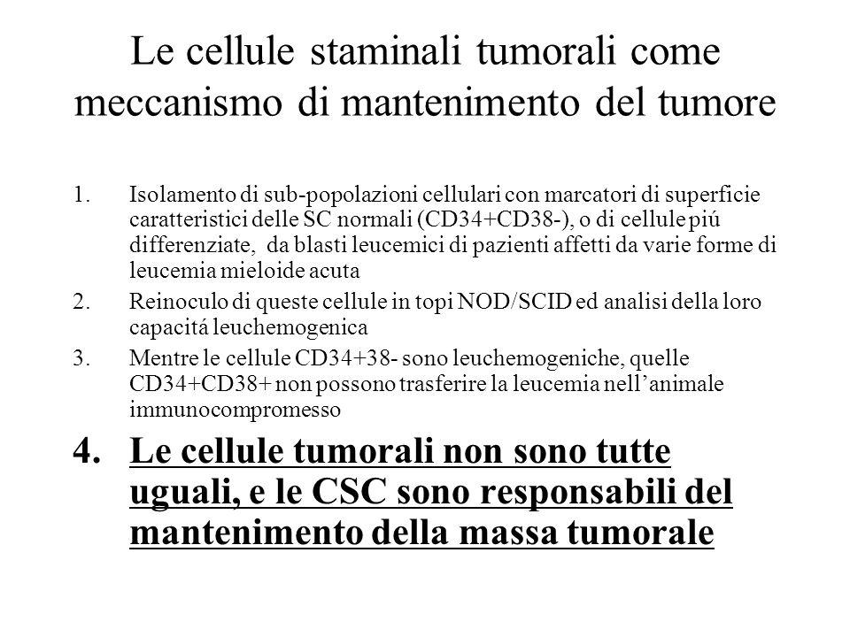 Evidenze da altri tumori Nei tumori solidi si può osservare sperimentalmente una simile struttura gerarchica (i marker sono definiti in maniera meno precisa)