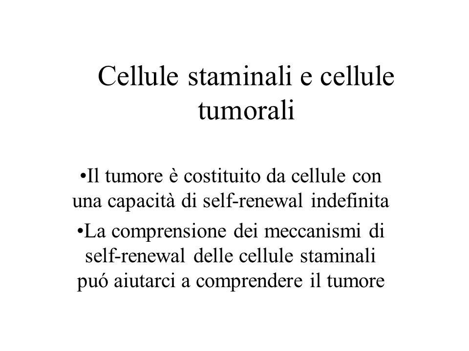 Pathway coinvolti nel self- renewal e nell'oncogenesi Ipotesi: le cellule tumorali -capaci di self- renewal- utilizzano la machinery presente nelle cellule staminali Dimostrazione indiretta di tale ipotesi é il fatto che diversi pathway associati all'oncogenesi sono stati coinvolti nel self- renewal delle cellule staminali