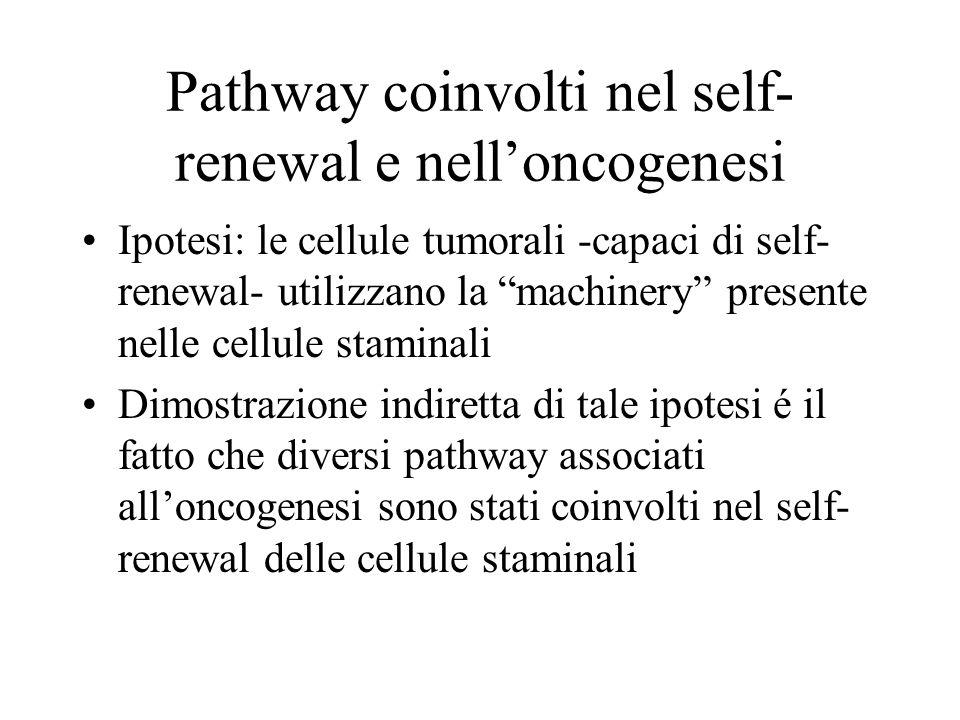 I pathway di Notch, Shh, Wnt Notch: l'attivazione di questo pathway é associata ad un aumento del pool delle cellule staminali Shh: popolazioni arricchite di cellule staminali umane rispondono in vitro a Shh con un aumentato self-renewal Wnt: la sua attivazione espande il pool di cellule staminali, mentre la sua soppressione inibisce la proliferazione delle cellule staminali