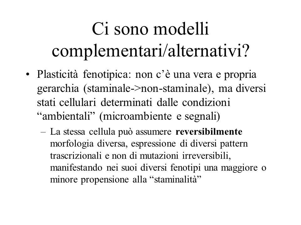 Ci sono modelli complementari/alternativi? Plasticità fenotipica: non c'è una vera e propria gerarchia (staminale->non-staminale), ma diversi stati ce