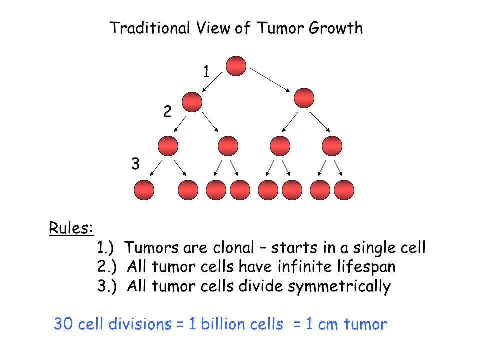 1 3 2 Rules: 1.) Tumors are clonal – starts in a single cell 2.) All tumor cells have infinite lifespan 3.) All tumor cells divide symmetrically 30 ce