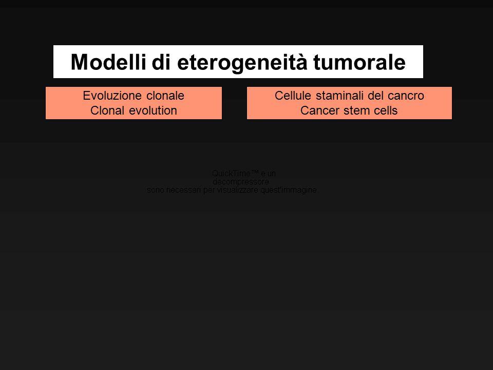 Evoluzione clonale Clonal evolution Cellule staminali del cancro Cancer stem cells Modelli di eterogeneità tumorale