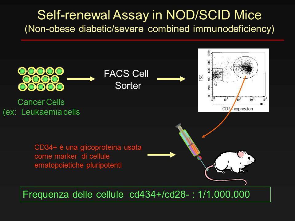 Self-renewal Assay in NOD/SCID Mice (Non-obese diabetic/severe combined immunodeficiency) FACS Cell Sorter Cancer Cells (ex: Leukaemia cells CD34+ è u