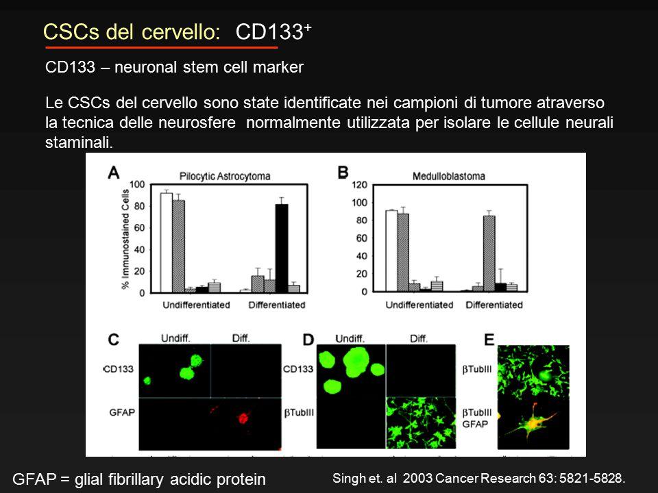 CSCs del cervello: CD133 + CD133 – neuronal stem cell marker Le CSCs del cervello sono state identificate nei campioni di tumore atraverso la tecnica