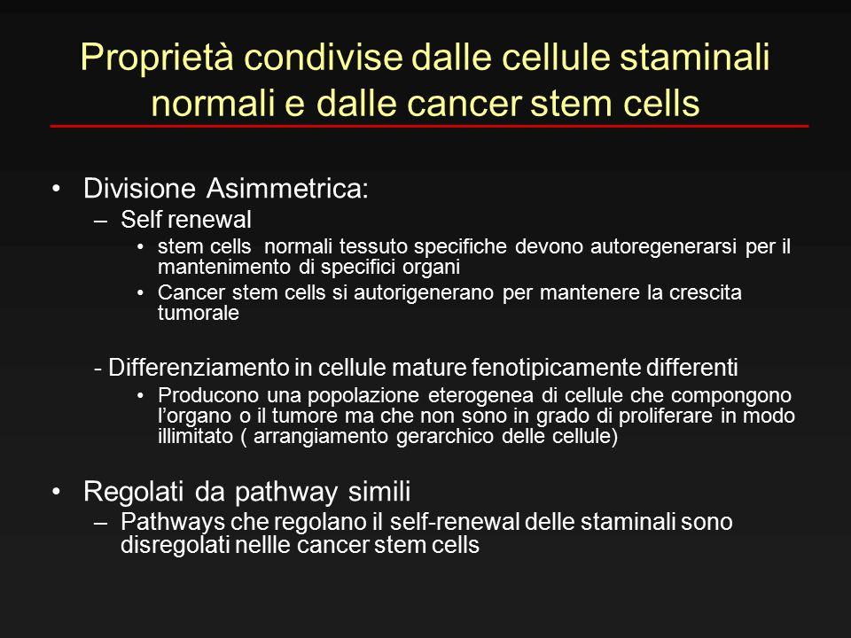 Proprietà condivise dalle cellule staminali normali e dalle cancer stem cells Divisione Asimmetrica: –Self renewal stem cells normali tessuto specific
