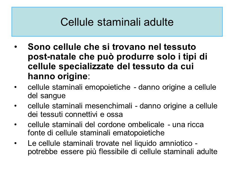 Cellule staminali adulte Sono cellule che si trovano nel tessuto post-natale che può produrre solo i tipi di cellule specializzate del tessuto da cui