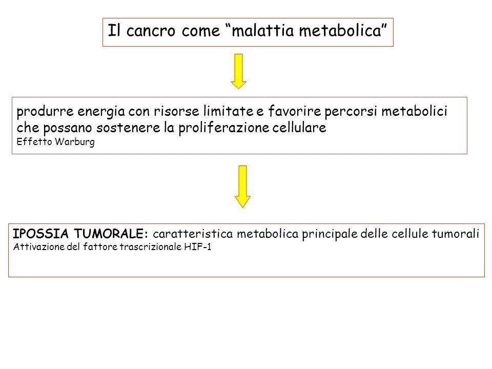produrre energia con risorse limitate e favorire percorsi metabolici che possano sostenere la proliferazione cellulare Effetto Warburg Il cancro come