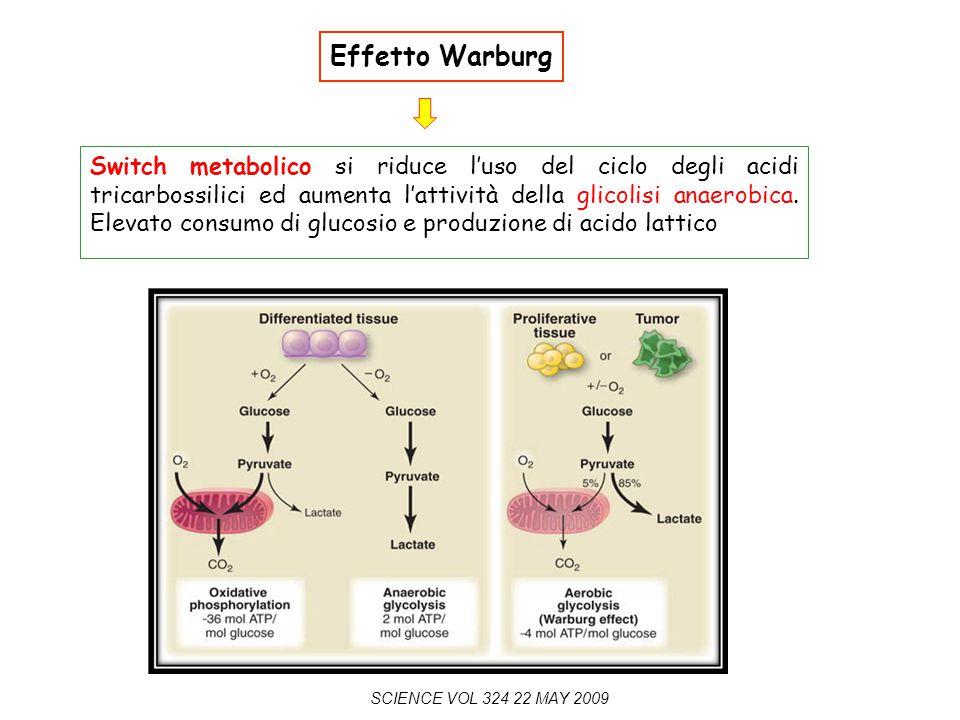 Effetto Warburg Switch metabolico si riduce l'uso del ciclo degli acidi tricarbossilici ed aumenta l'attività della glicolisi anaerobica. Elevato cons