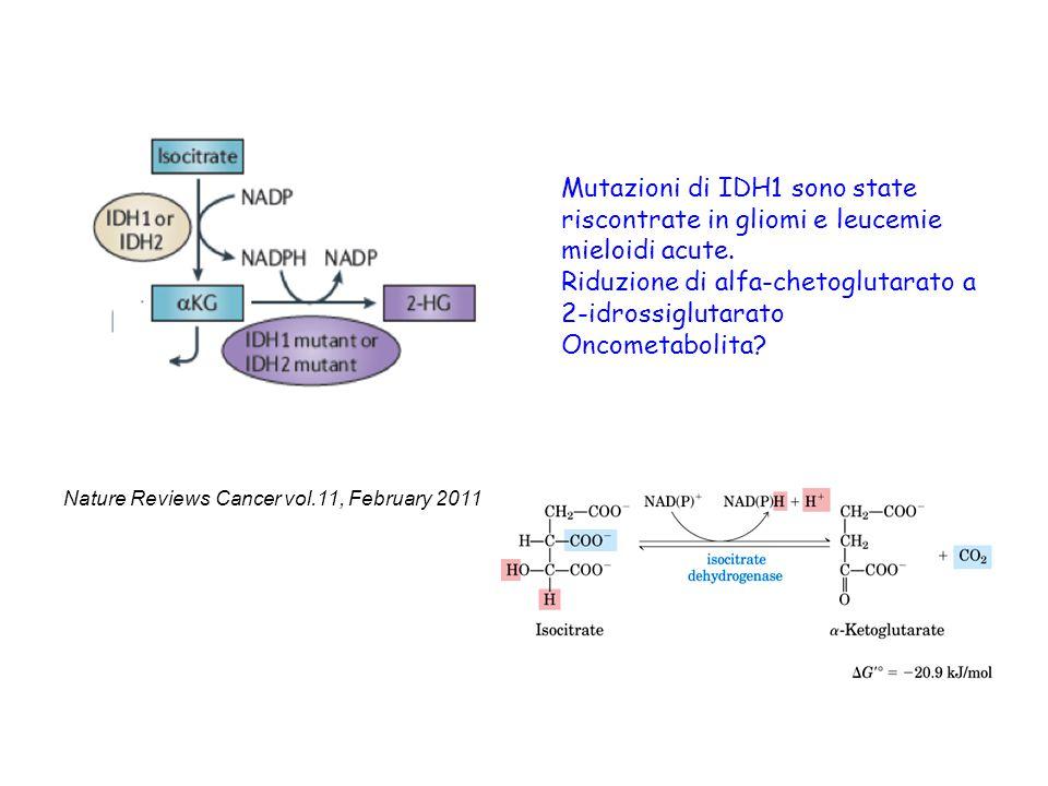 Mutazioni di IDH1 sono state riscontrate in gliomi e leucemie mieloidi acute. Riduzione di alfa-chetoglutarato a 2-idrossiglutarato Oncometabolita? Na