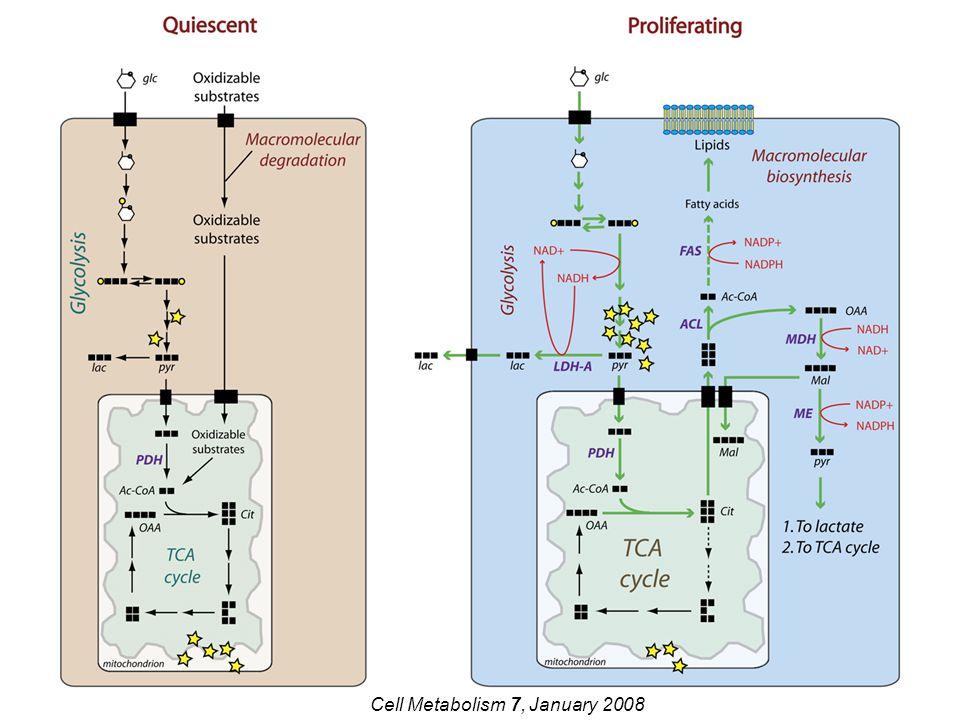 Nature Reviews Cancer vol.11, February 2011 Oncogeni e oncosoppressori possono influenzare lo switch tra glicolisi anaerobica e ciclo degli acidi tricarbossilici (modulando l'espressione di specifici enzimi) e aumentare la captazione di glucosio e di glutammina.