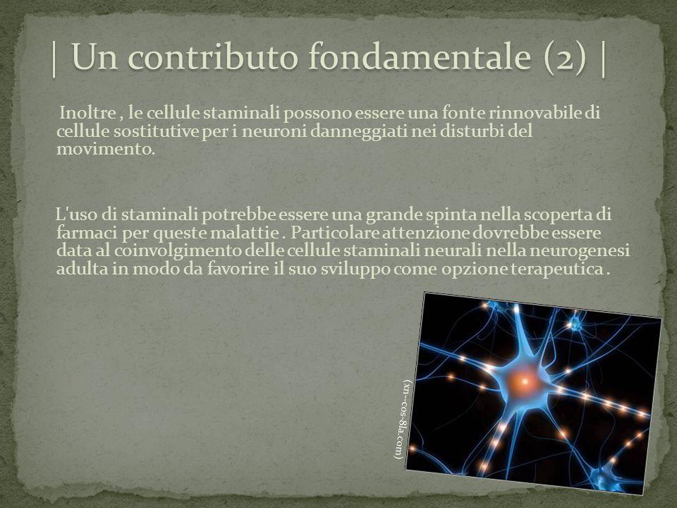 (xn--cos-8la.com) | Un contributo fondamentale (2) | Inoltre, le cellule staminali possono essere una fonte rinnovabile di cellule sostitutive per i n