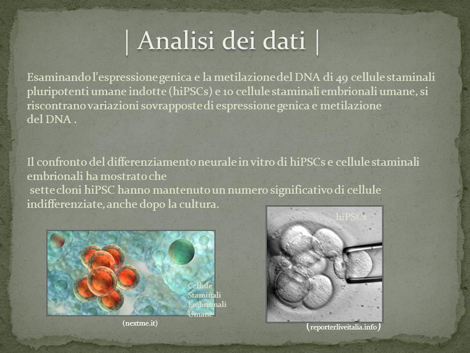 Esaminando l'espressione genica e la metilazione del DNA di 49 cellule staminali pluripotenti umane indotte (hiPSCs) e 10 cellule staminali embrionali
