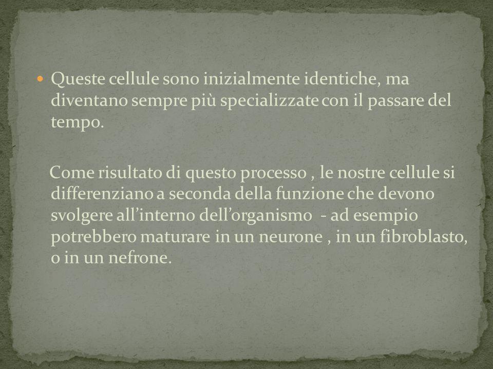 (istitutosangiovannibosco.net) (etatpur.it) (my-personaltrainer.it)