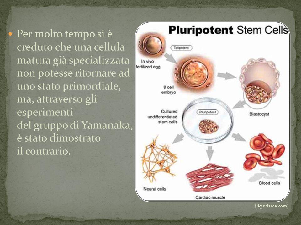 Per molto tempo si è creduto che una cellula matura già specializzata non potesse ritornare ad uno stato primordiale, ma, attraverso gli esperimenti d