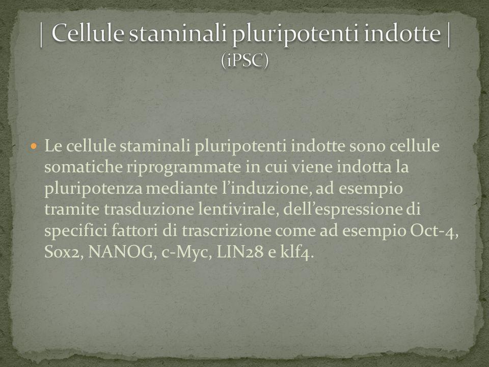 Le cellule staminali pluripotenti indotte sono cellule somatiche riprogrammate in cui viene indotta la pluripotenza mediante l'induzione, ad esempio t