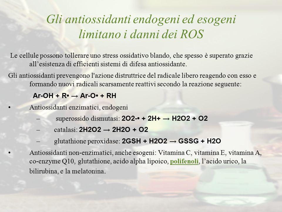 Gli antiossidanti endogeni ed esogeni limitano i danni dei ROS Le cellule possono tollerare uno stress ossidativo blando, che spesso è superato grazie
