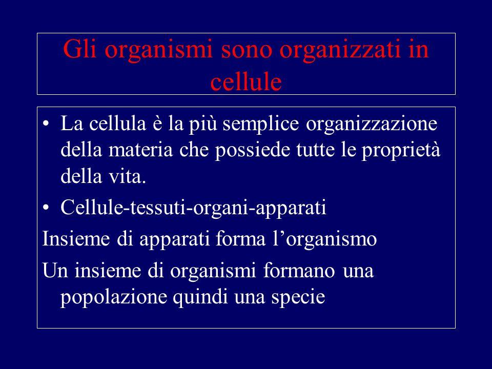 Organizzazione della cellula Struttura e funzione