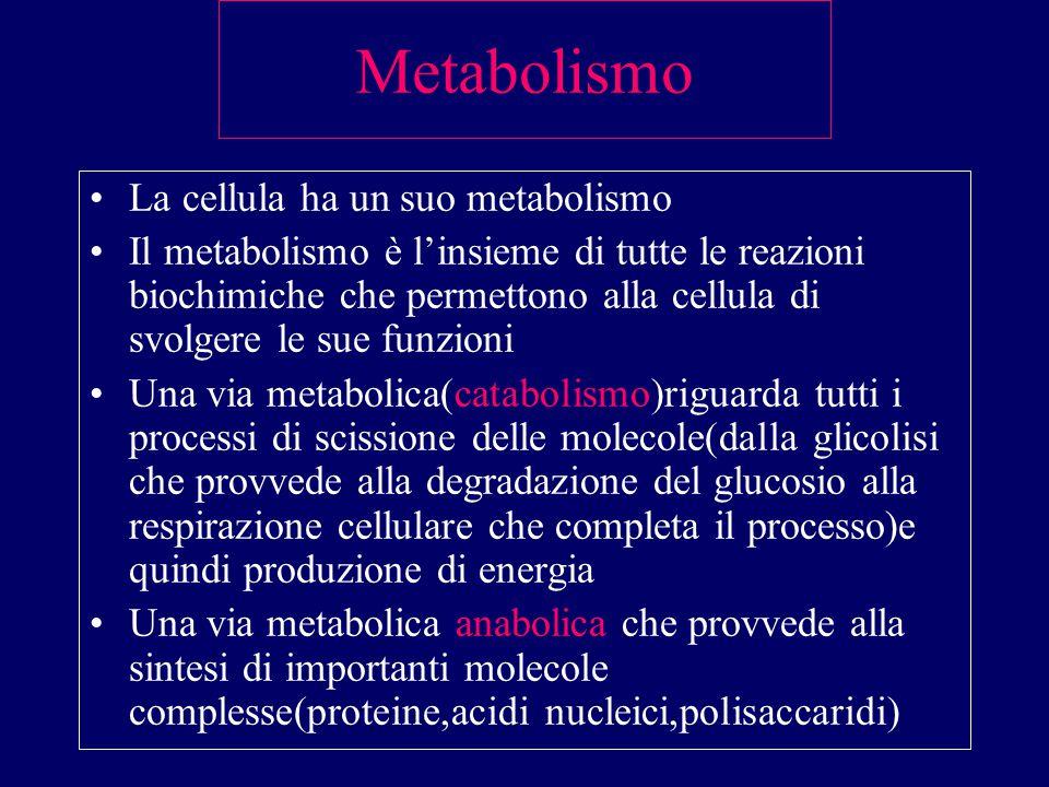 M.O. e M.E. M.O.:ingrandisce un oggetto 1000 volte. Cellula, nucleo,mitocondri M.E.:ingrandisce un oggetto 250.000 volte. ultrastruttura cellulare
