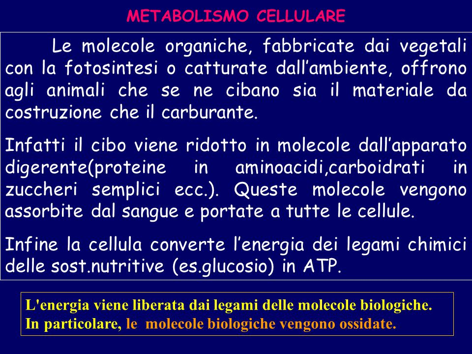 Metabolismo La cellula ha un suo metabolismo Il metabolismo è l'insieme di tutte le reazioni biochimiche che permettono alla cellula di svolgere le sue funzioni Una via metabolica(catabolismo)riguarda tutti i processi di scissione delle molecole(dalla glicolisi che provvede alla degradazione del glucosio alla respirazione cellulare che completa il processo)e quindi produzione di energia Una via metabolica anabolica che provvede alla sintesi di importanti molecole complesse(proteine,acidi nucleici,polisaccaridi)