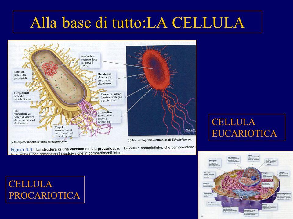 Il metabolismo più semplice è la Respirazione animale La superficie deputata agli scambi gassosi può essere: - tutta la superficie esterna del corpo -