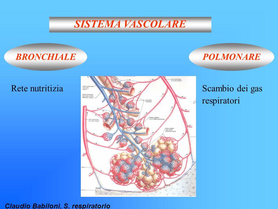 Claudio Babiloni, S. respiratorio SISTEMA VASCOLARE BRONCHIALEPOLMONARE Rete nutritiziaScambio dei gas respiratori